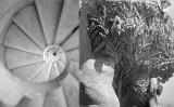 Dues fotografies de Joaquim Gomis del 1946 de la Sagrada Família: escala de cargol d'una de les torres i detall de la representació de 'L'arbre de la vida'
