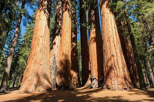 Parc Nacional Sequoia