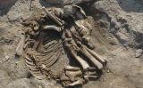 Restes d'un fetus de cavall als Vilars d'Arbeca