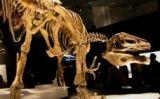 Reconstrucció d'un esquelet de megaraptor -  FunkMonk