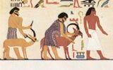 Sacrifici de cabres en una tomba de la dinastia XII d'Egipte