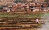 Cultius d'arròs a Madagascar -  Moongateclimber