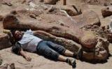 Un dels ossos de dinosaure trobats a la Patagònia -  Museo Egidio Feruglio