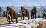 Il·lustració d'uns mamuts