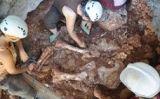 Esquelet de l'elefant -  Ajuntament de Castelldefels