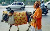 Vaca a Delhi