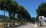 Carretera arbrada de Montblanc