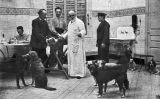 El doctor Jaume Ferran Clua provant la seva millora de la vacuna de la ràbia amb gossos