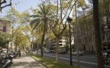 L'avinguda Diagonal de Barcelona va ser rebatejada com a avenida Alfonso XIII durant la dictadura de Primo de Rivera