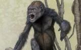 Dibuix del 'Pierolapithecus' que va publicar la revista nord-americana 'Science' quan es va fer pública la troballa internacionalment